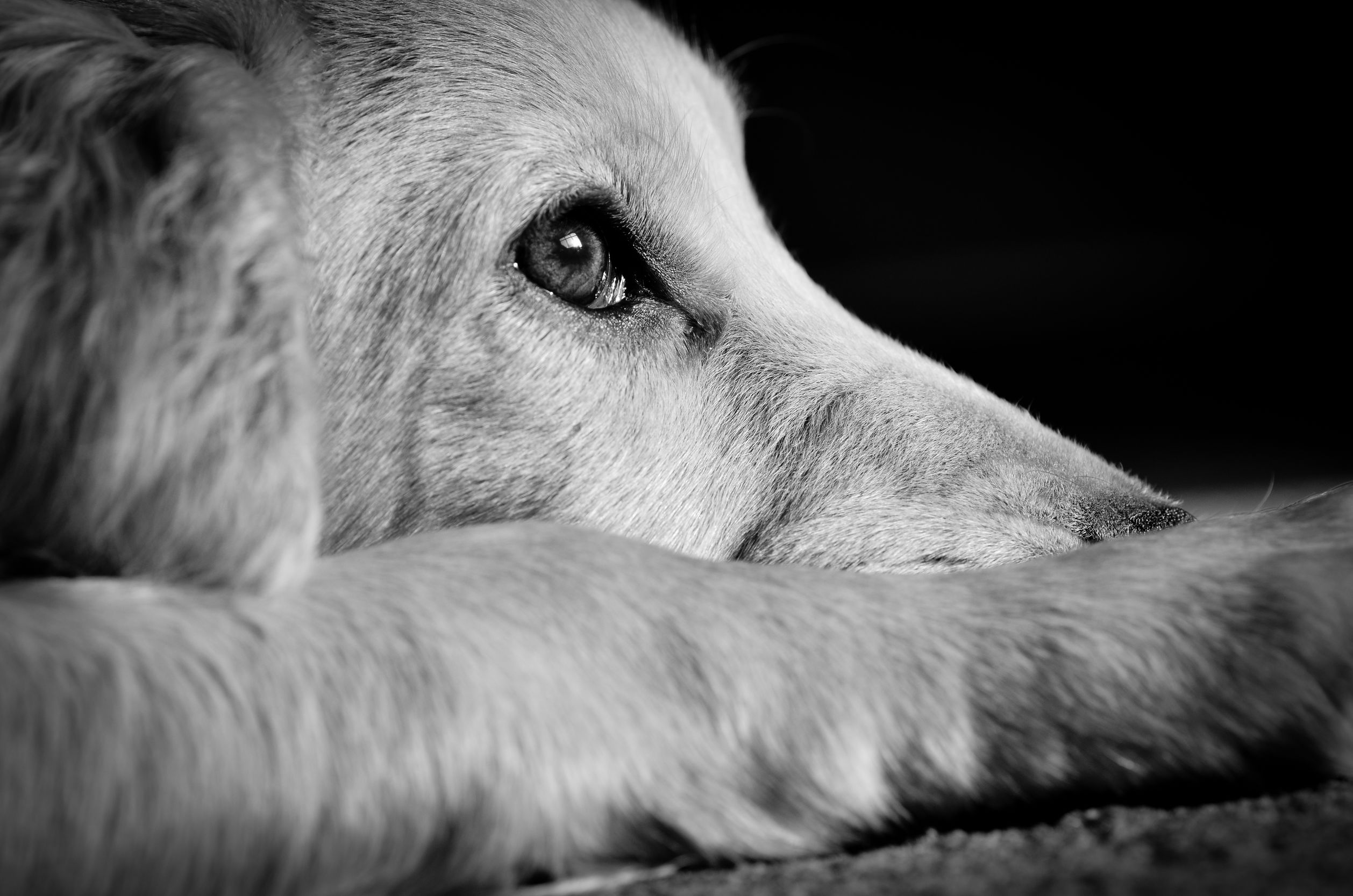 2 Essential Facts On Bail Bonds For Animal Cruelty In Colorado